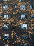 Wind, Trees, & Windows