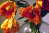 flowers etc.