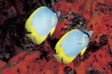 Borboleta - Butterfly
