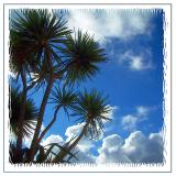 Palms and sky, St. Ives, Cornwall