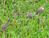 Birds at Maspalomas