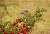 yardbirds2005