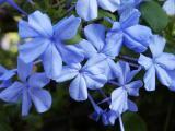 Hawaii: Blue