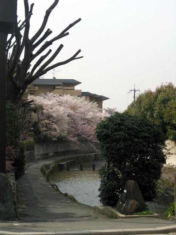 Water way near Torii