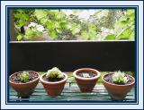 4 little pots