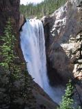 Lower Falls - Yellowstone N.P.