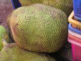 ugly jackfruit