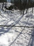 beaver path - 1