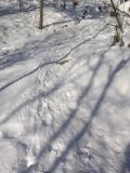 beaver path - 2