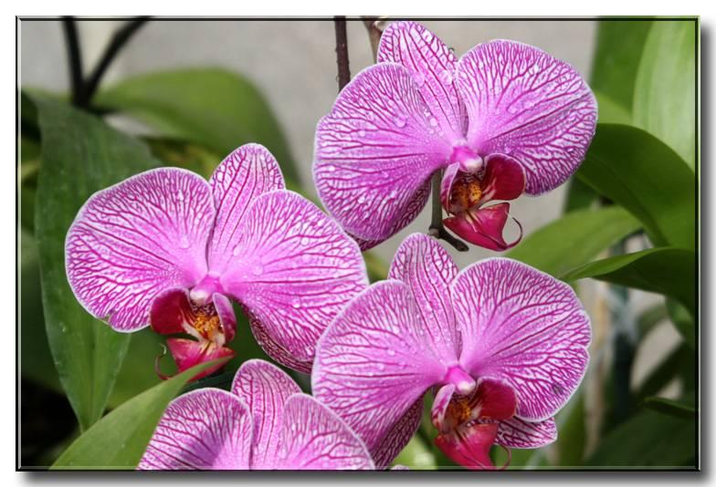 kcflower02-05 003 copy.jpg