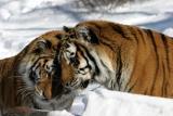 Bronx Zoo in Winter