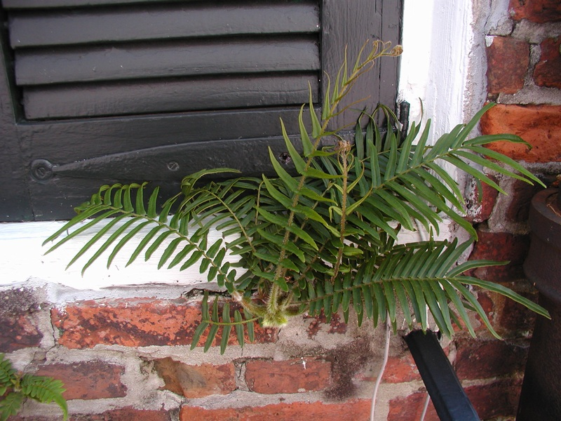 Life Grows Everywhere In New Orleans.jpg