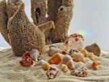 Photographing Beachcombings...natural light, UZI, BMacro