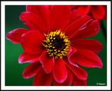 8/31/04 - Red Flower in the Morning...
