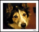 Airlie the Wonder Dog (YAPP)