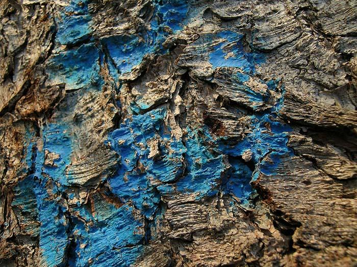 écorce et bleu