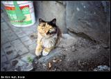 Cat in Beijing