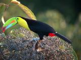 Barbets, Toucans, Woodpeckers