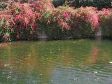 Pond near GM Test Track