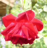 Slater's Crimson China