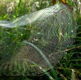 Unidentified Spider Web