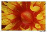 Pólipo de Coral