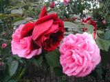 The Squire and Gertrude Jekyll...