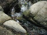 This is part of their  little stream at the bottom of their hill...it is my favorite place in their garden...