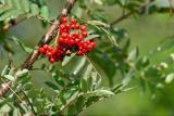 Berries closeup