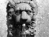 30th August, thirsty lion