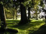 6th September, shady trees