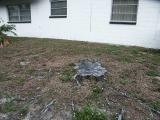 Tree Stump, west side.jpg