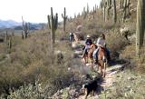 Horseback Riding through the Superstitions