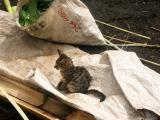 Such a small kitten