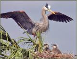 Nest 2 - Mother returning to nest