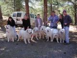 7-Dog Club