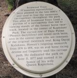 Ironwood, Kapiolani Park