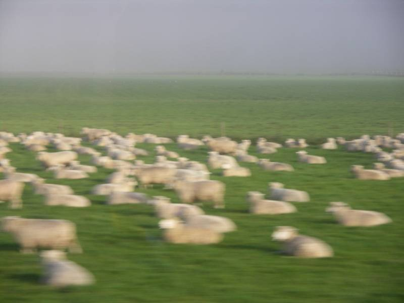 This is New Zealand so it must be sheep flying by
