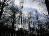 trees_risskov.JPG