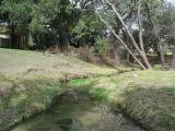 Gracy Woods Park - Spring 2004