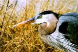 Art of the Great Blue Heron