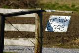 sign post.jpg
