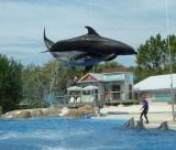 Dolphins, Sea World, Orlando, FL