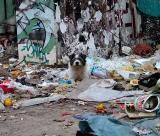 Perro de Calle