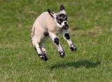 woolly jumper .