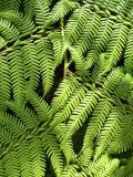 La Yunga Fern Forest