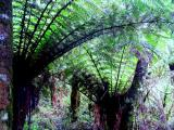 Giant Fern Forest