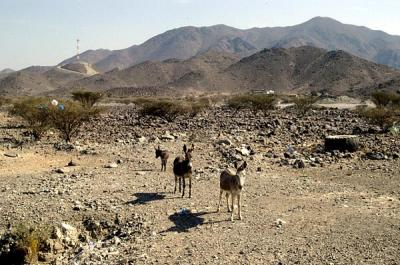 More donkeys
