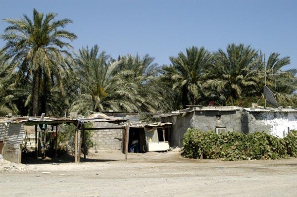 Palm grove, Fujairah