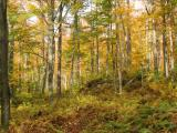 Bread Loaf Wilderness